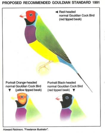Gouldian Standards Naturally For Birds